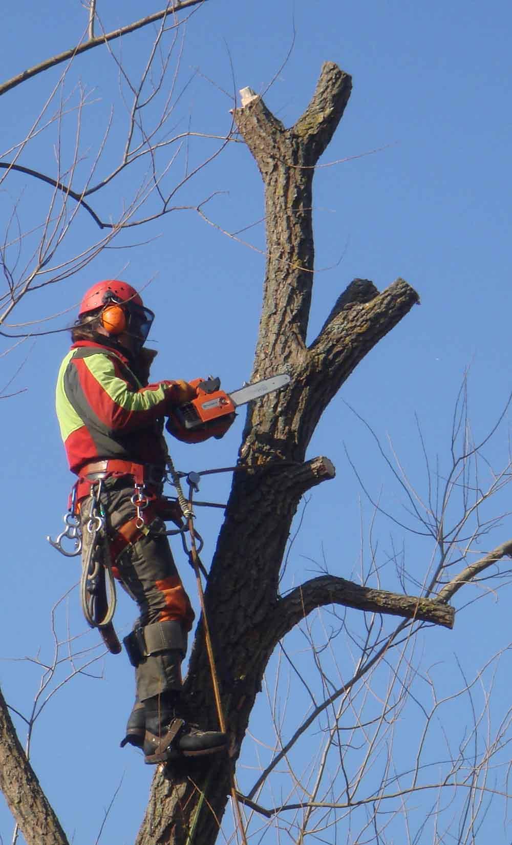 Baumpflege  Baumpflege Oberhofer